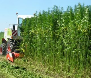 Picture of hemp farm and tractor